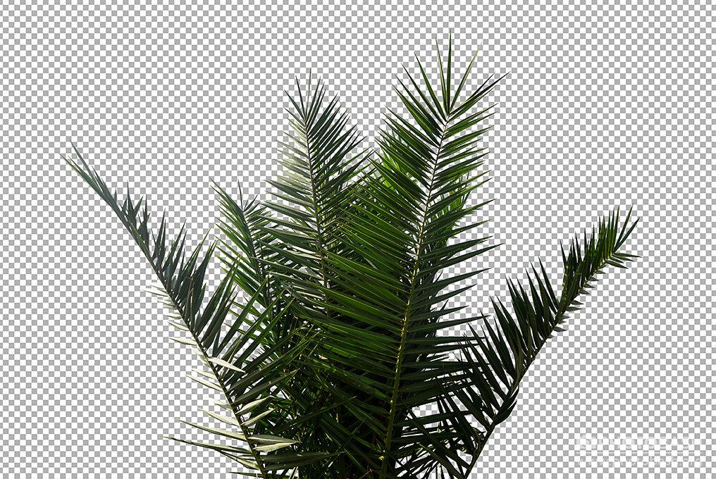 Palm-Trees-Cutout-Plant-Masked.jpg