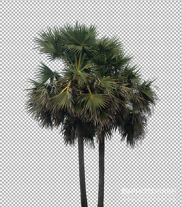 Palm-Trees-PNG-Masked.jpg
