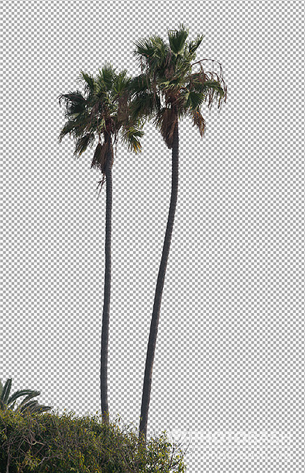 Palm-Trees-Tropical-Foliage-PNG.jpg