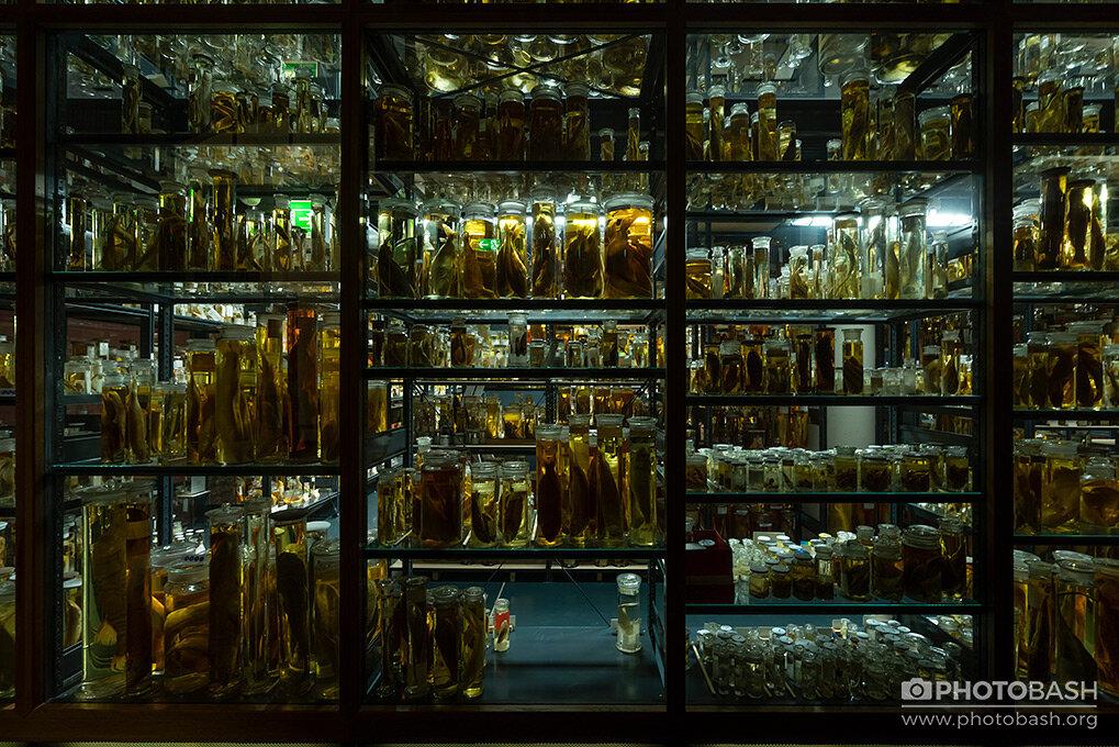 Jarred-Specimens-Laboratory-Creepy-Horror.jpg