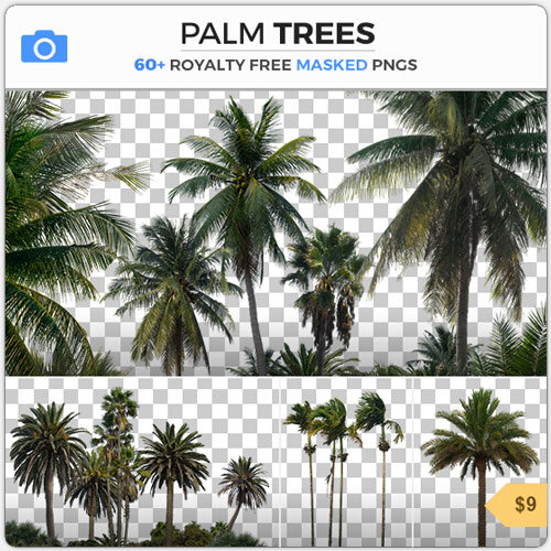 Palm Trees Masked PNG Trees Cutout Tropical Stock Plants