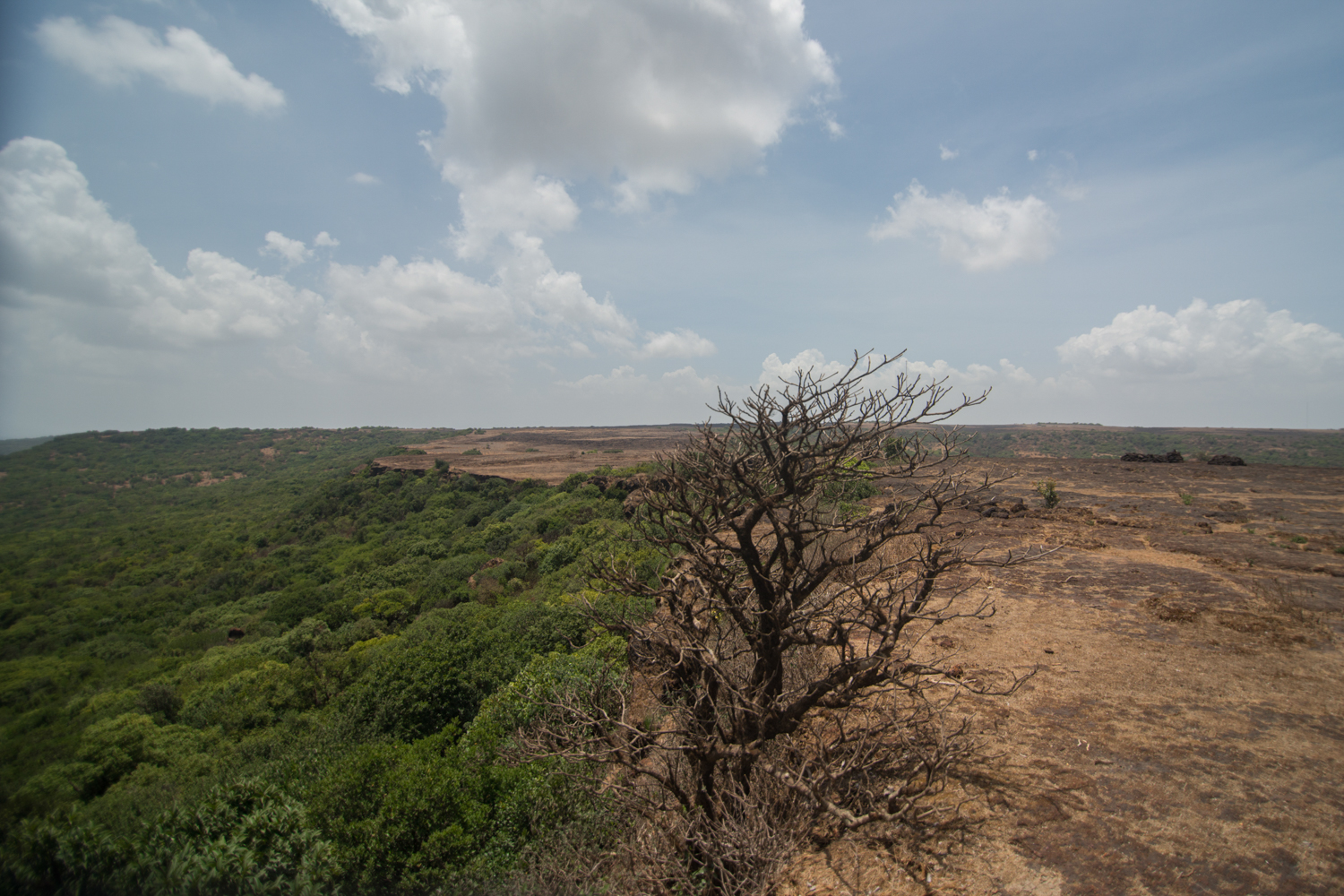 Or should we be looking in the lush evergreen forests of the adjacent Koyna Tiger Reserve?