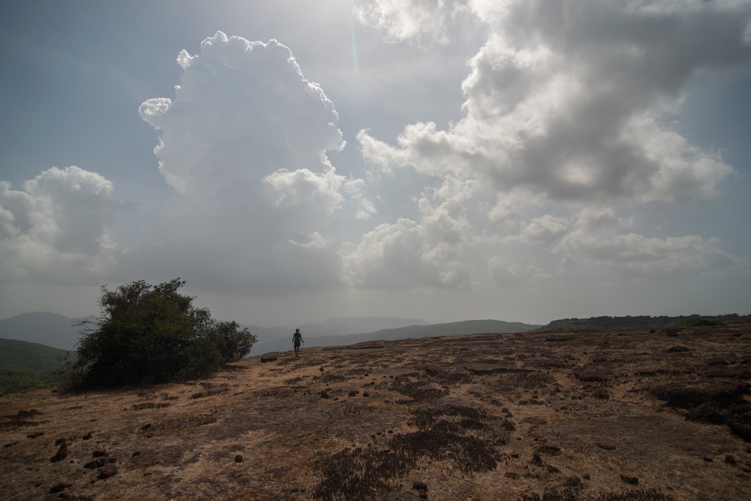 From tiny hamlets of the Koyna Tiger reserve, women bring their livestock to graze on the plateau. This woman stands on the edge of the plateau looking for her cattle.