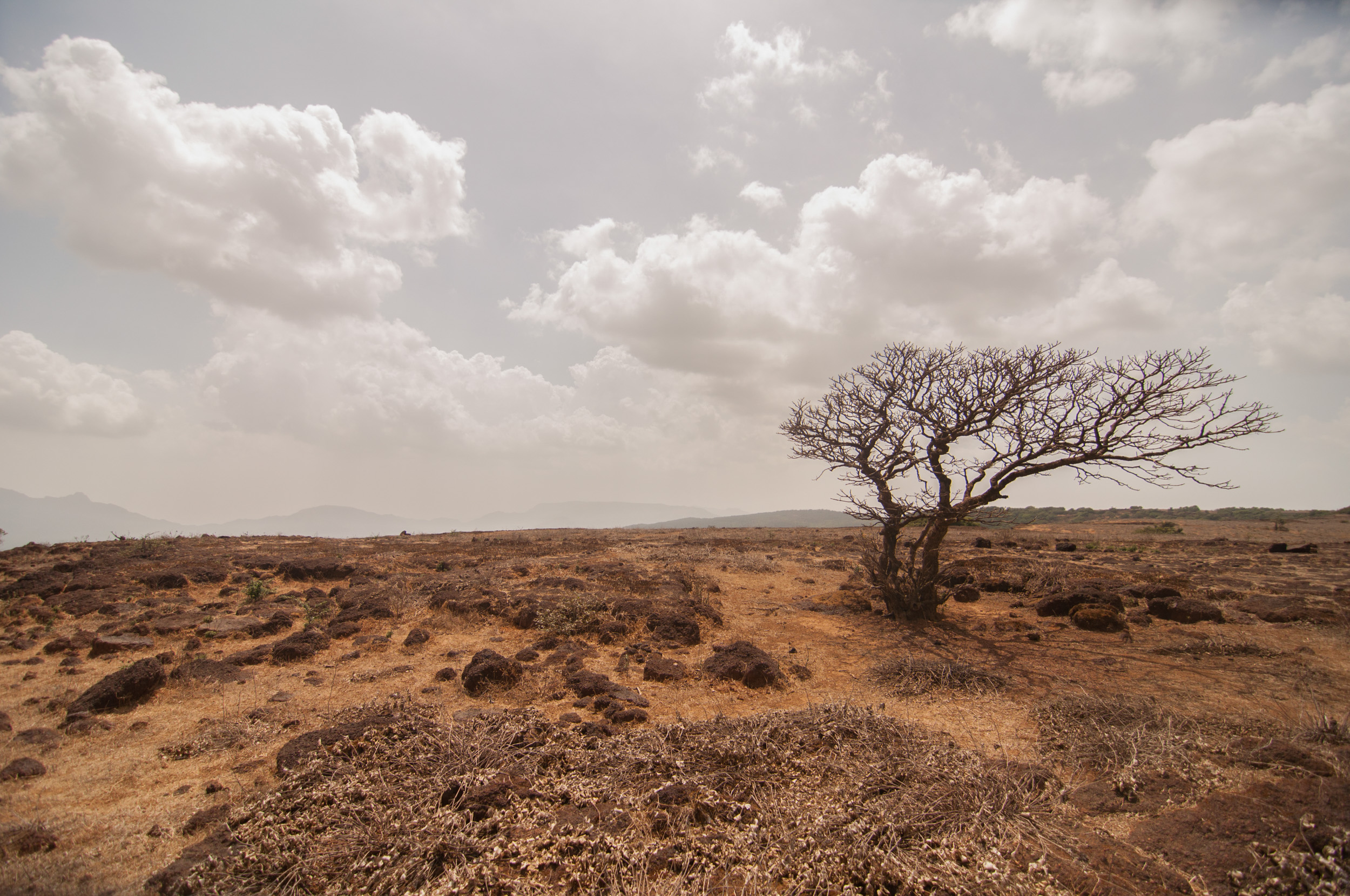 Although rich in geological history, the barren plateau-islands, burnt and desolate in the harsh May sun seem devoid of any signs of wildlife. Could anything survive here?