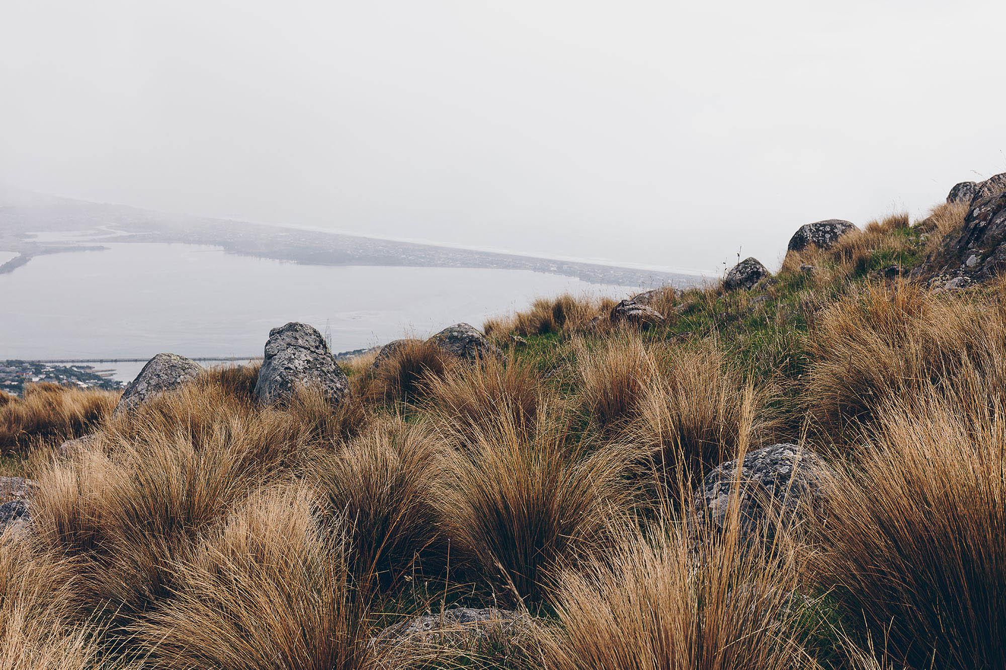 NZ_01.jpg