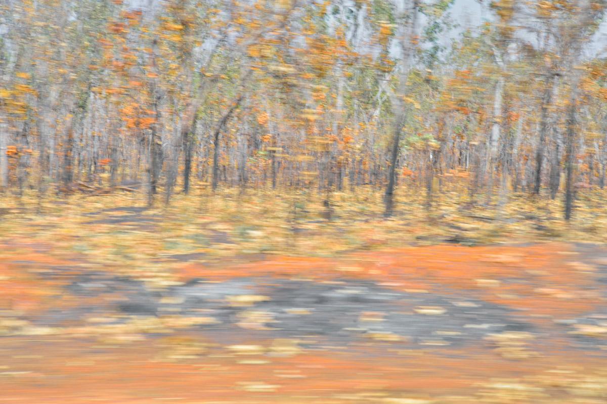 sue_murray_art_kakadu_autumn-1.jpg