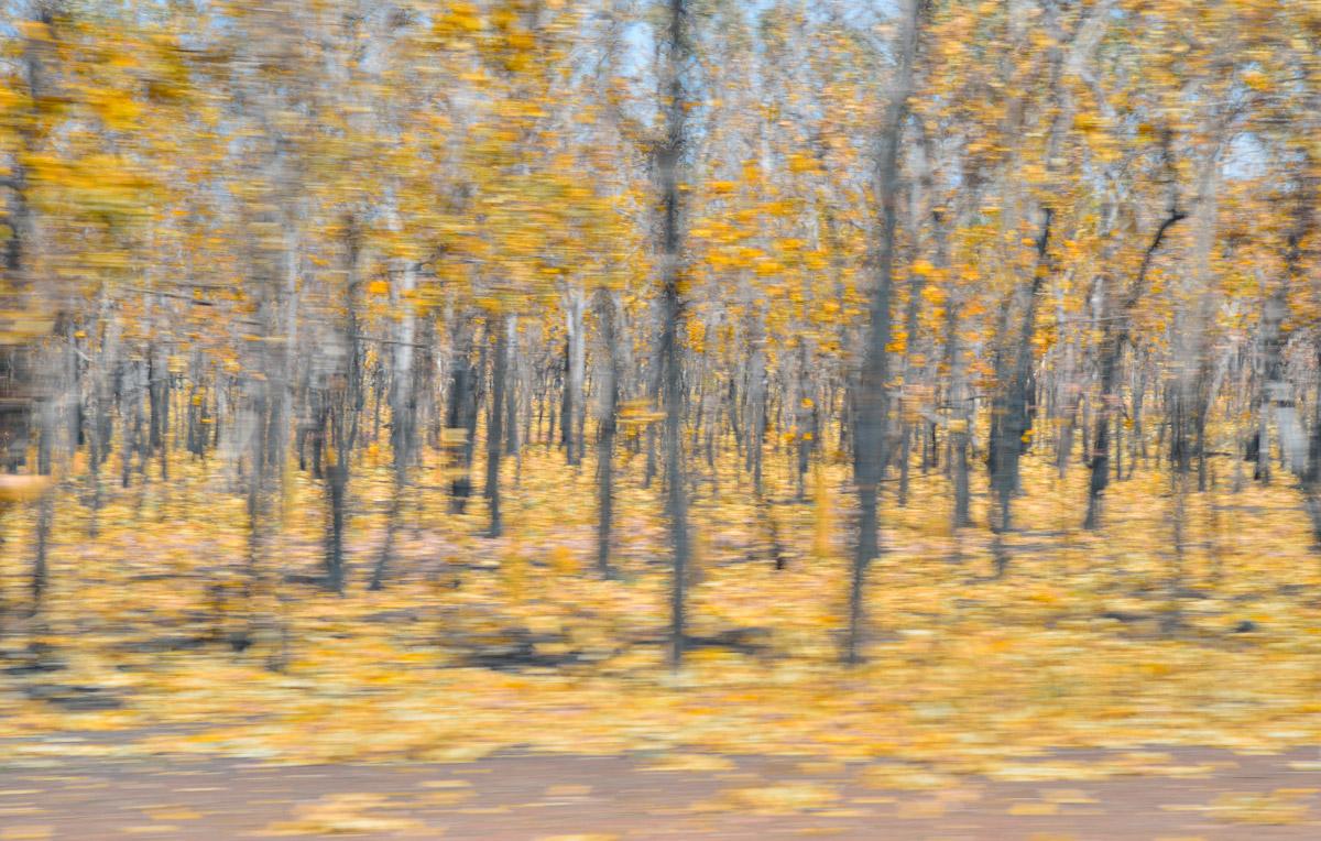 sue_murray_art_kakadu_autumn-2.jpg