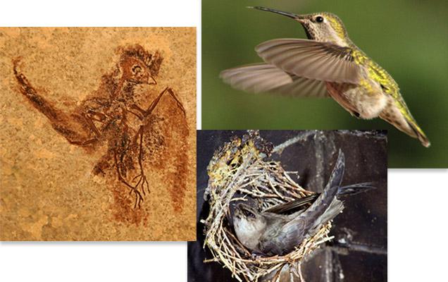 sn-fossilbird.jpg