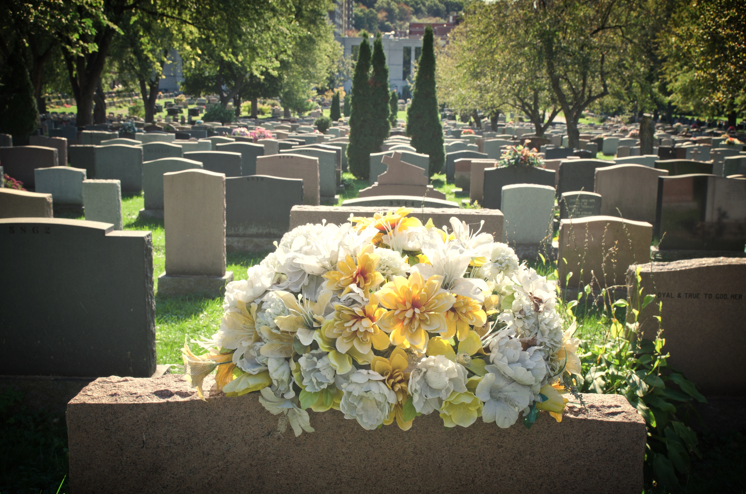 Traditional Burial or Cremation?