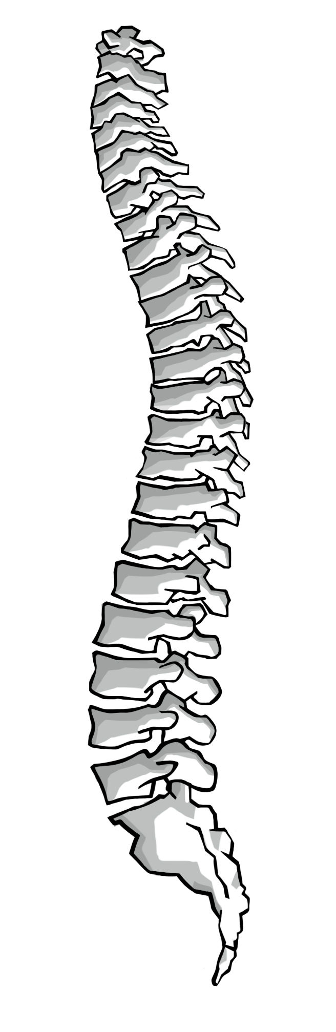 The Spine and Sacrum