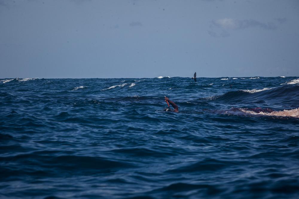 Oscar siagian_tale from the sea_09.jpg
