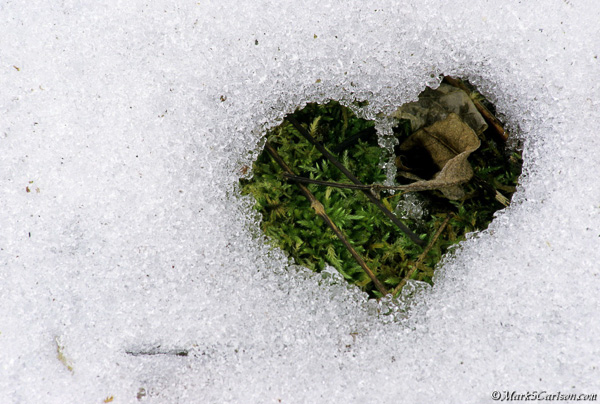 Heart pattern snow melt, exposing moss and leaves; ©markscarlson.com