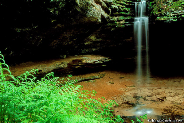 Fern-bank-Twin-Falls