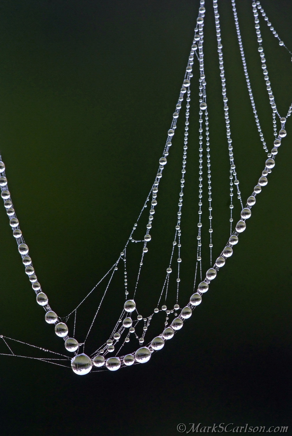 Basket-shaped web strands with dew; ©markscarlson.com