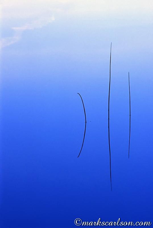 VP028-Three straight reeds ©markscarlson.com
