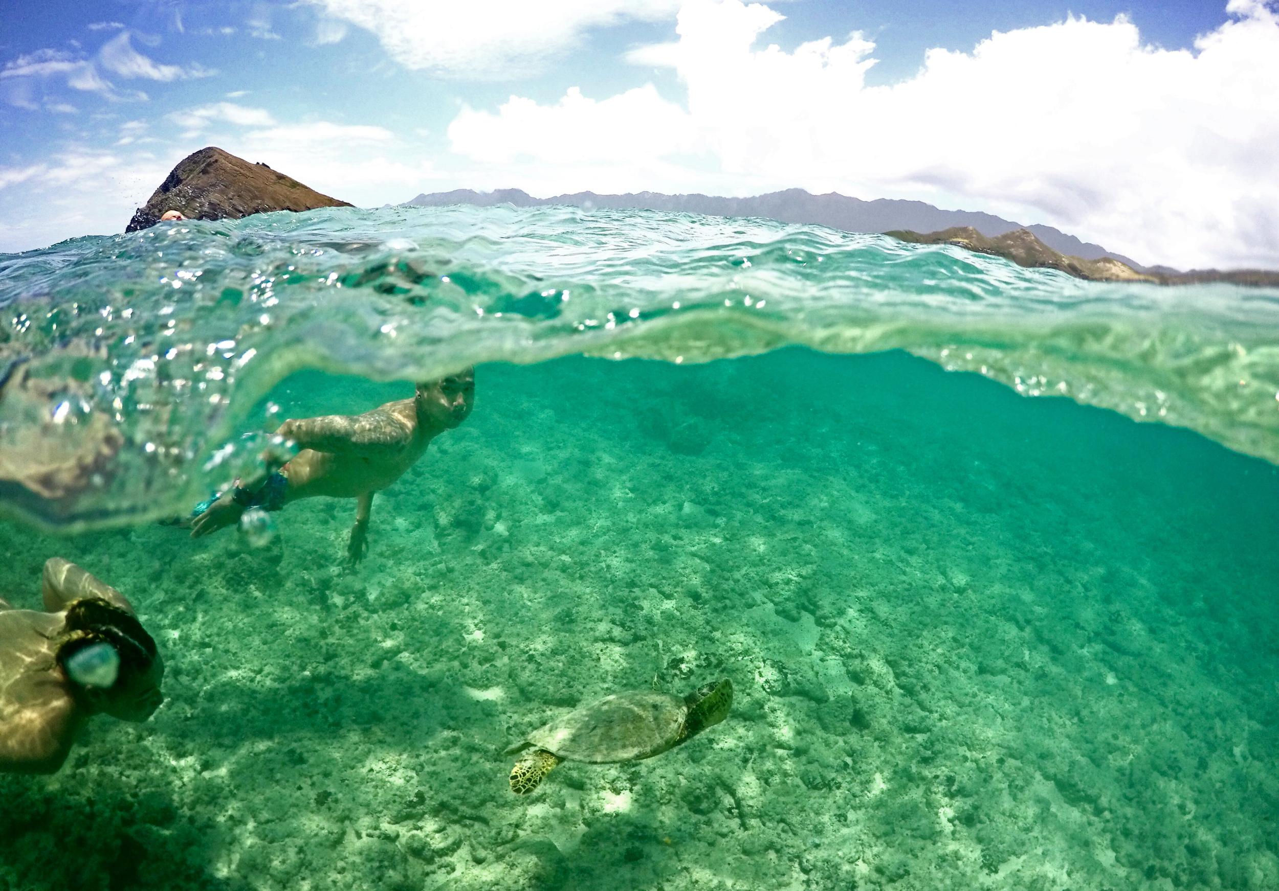 turtleswim.png