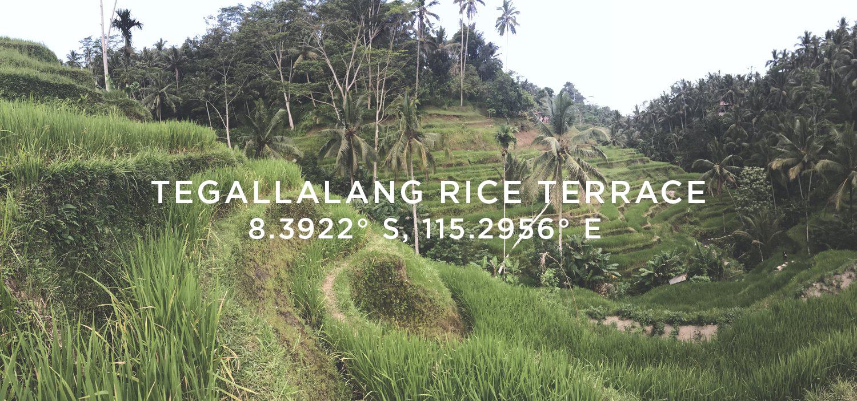 tegallalang-Rice-Terrace - hobo-world-bali-