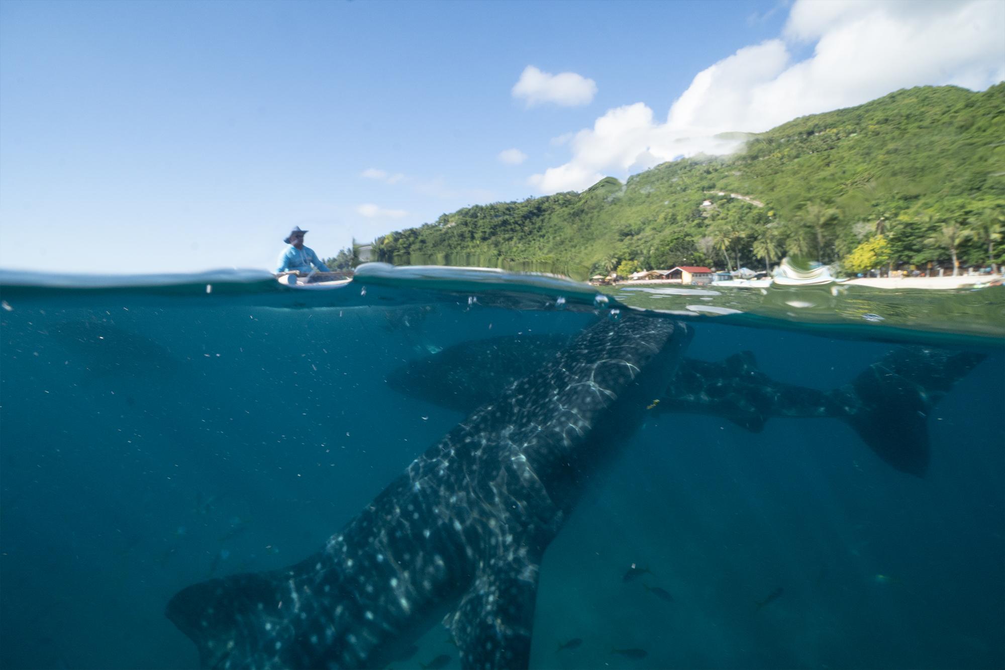 WhaleShark-Cebu-Oslob-hobo-life-hoang
