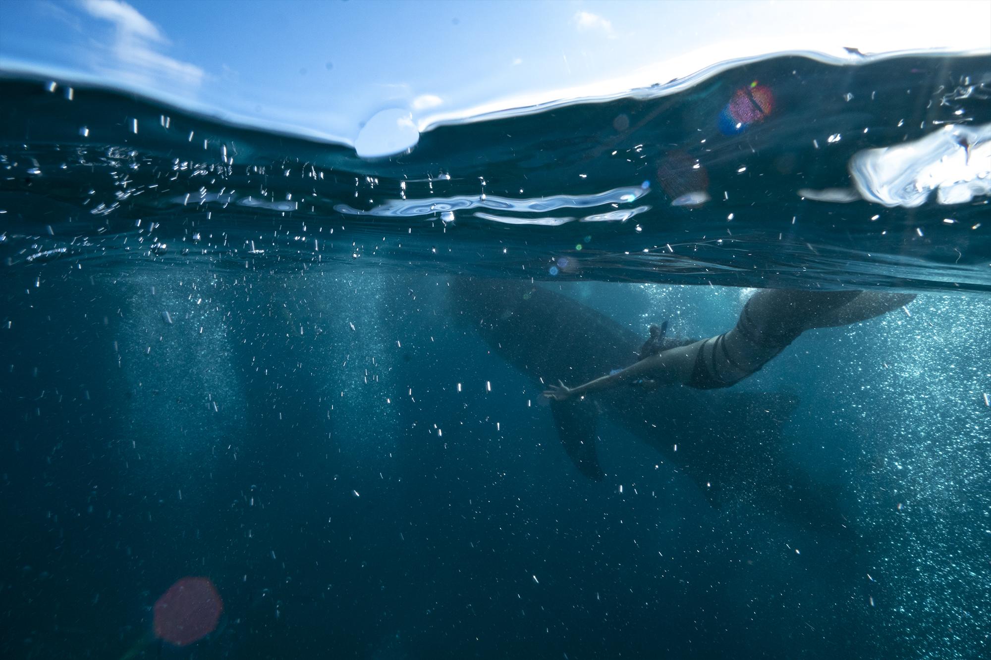 WhaleShark-Cebu-Oslob-hobo-life-anna-lee-dive
