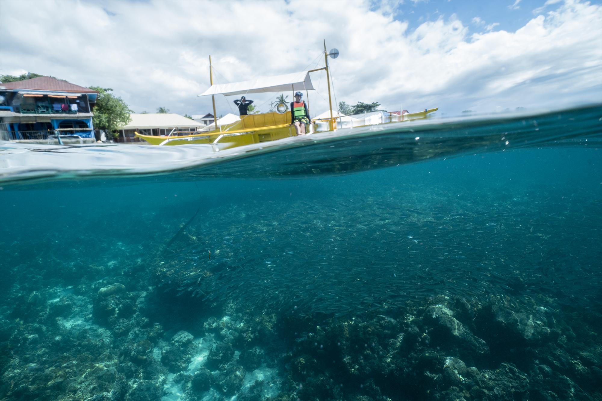 Sardines-MoalBoal-cebu-snorkeling-hobo-life-hoang