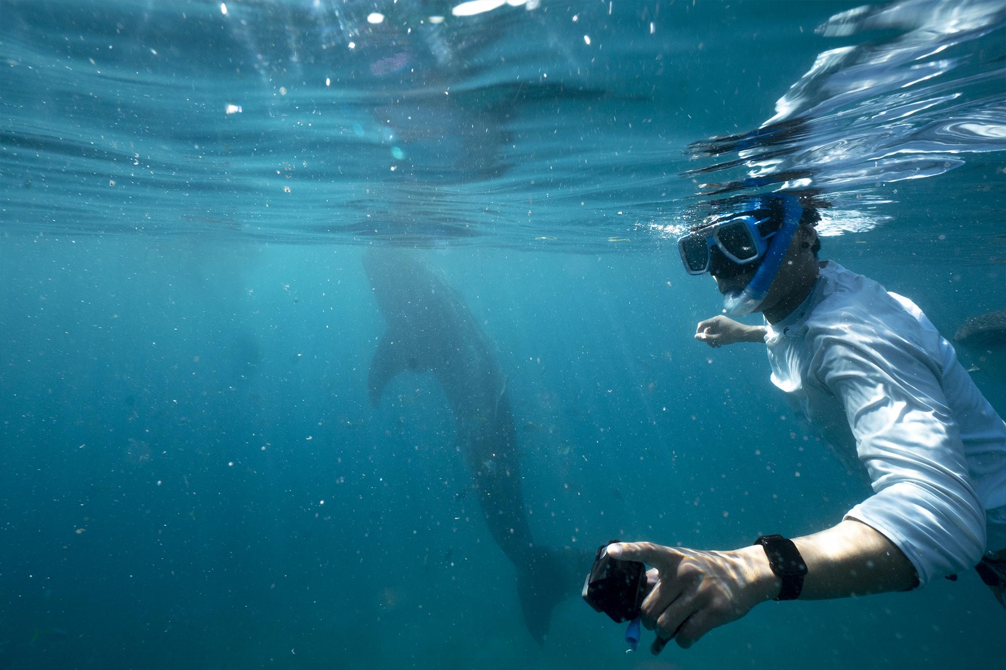 Whalesharkhoang.jpg