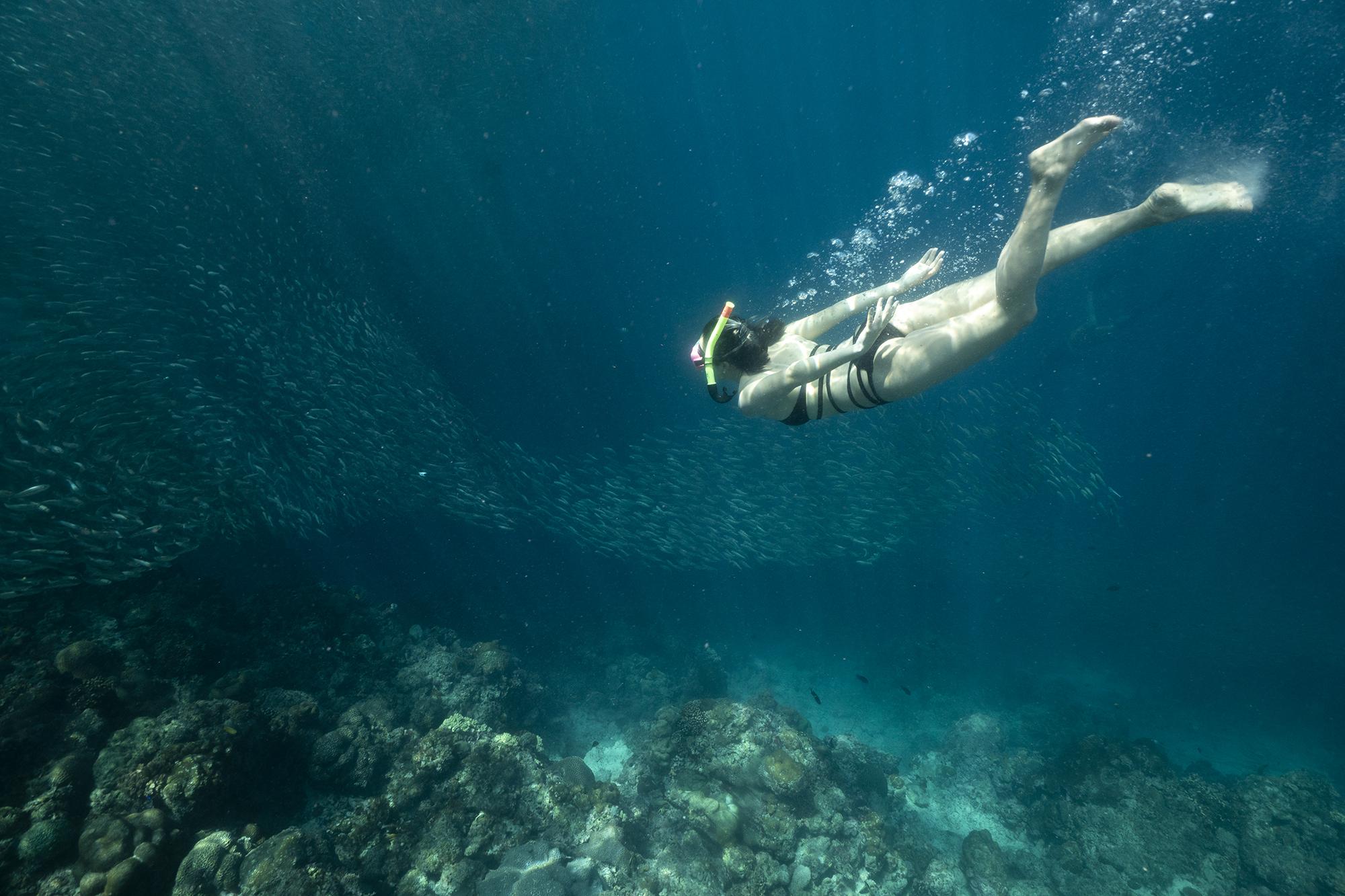 WhaleShark-Cebu-Oslob-hobo-life-sardines-anna-k-lee