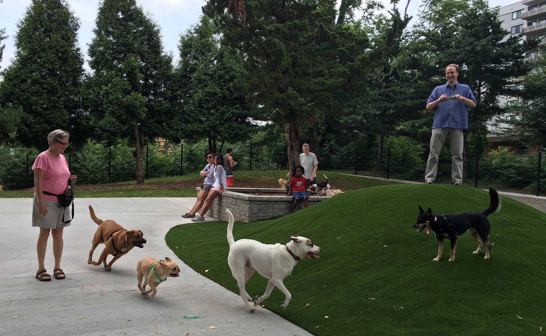 dog-chase-day-1-Ellsworth-Dog-Park.6.15.16.jpg