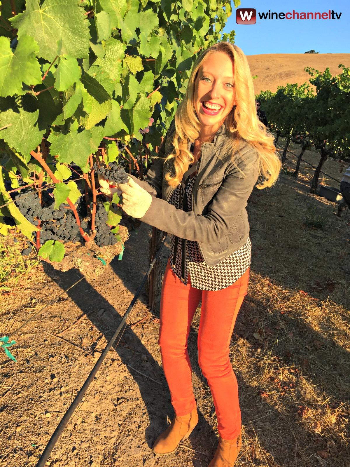 jess vineyard.jpg