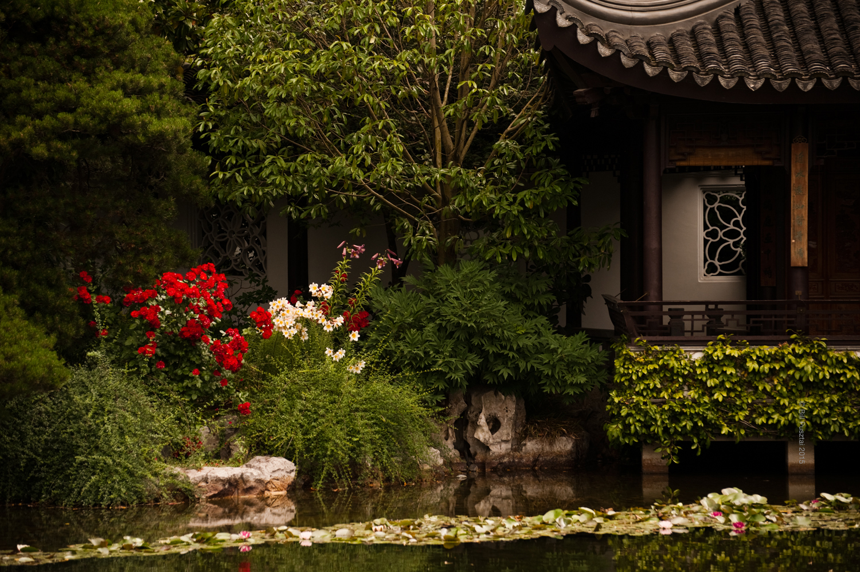 Rosa 'Sevillana', Lilium 'Amethyst Temple', Lilium regale