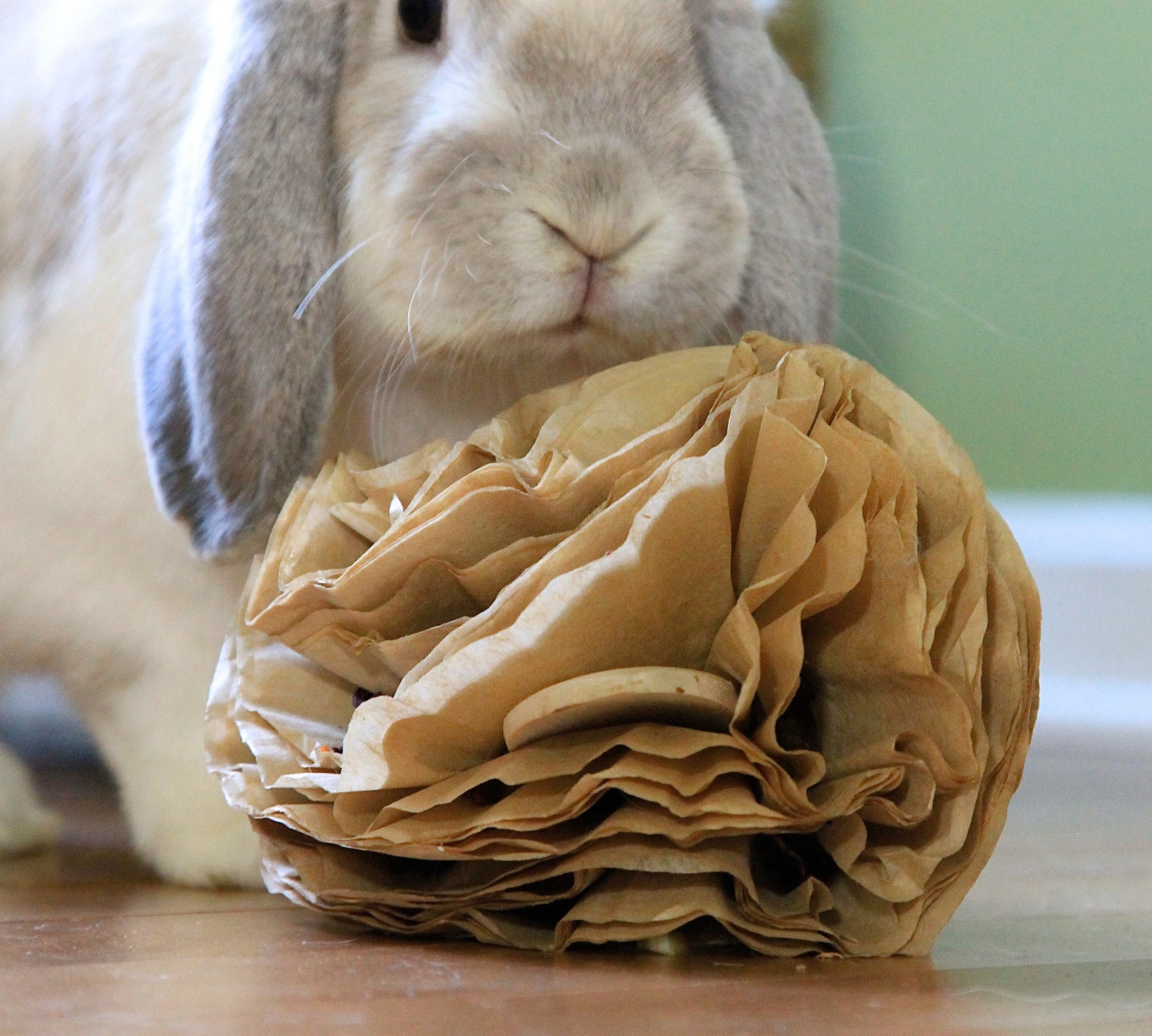 rabbit enrichment