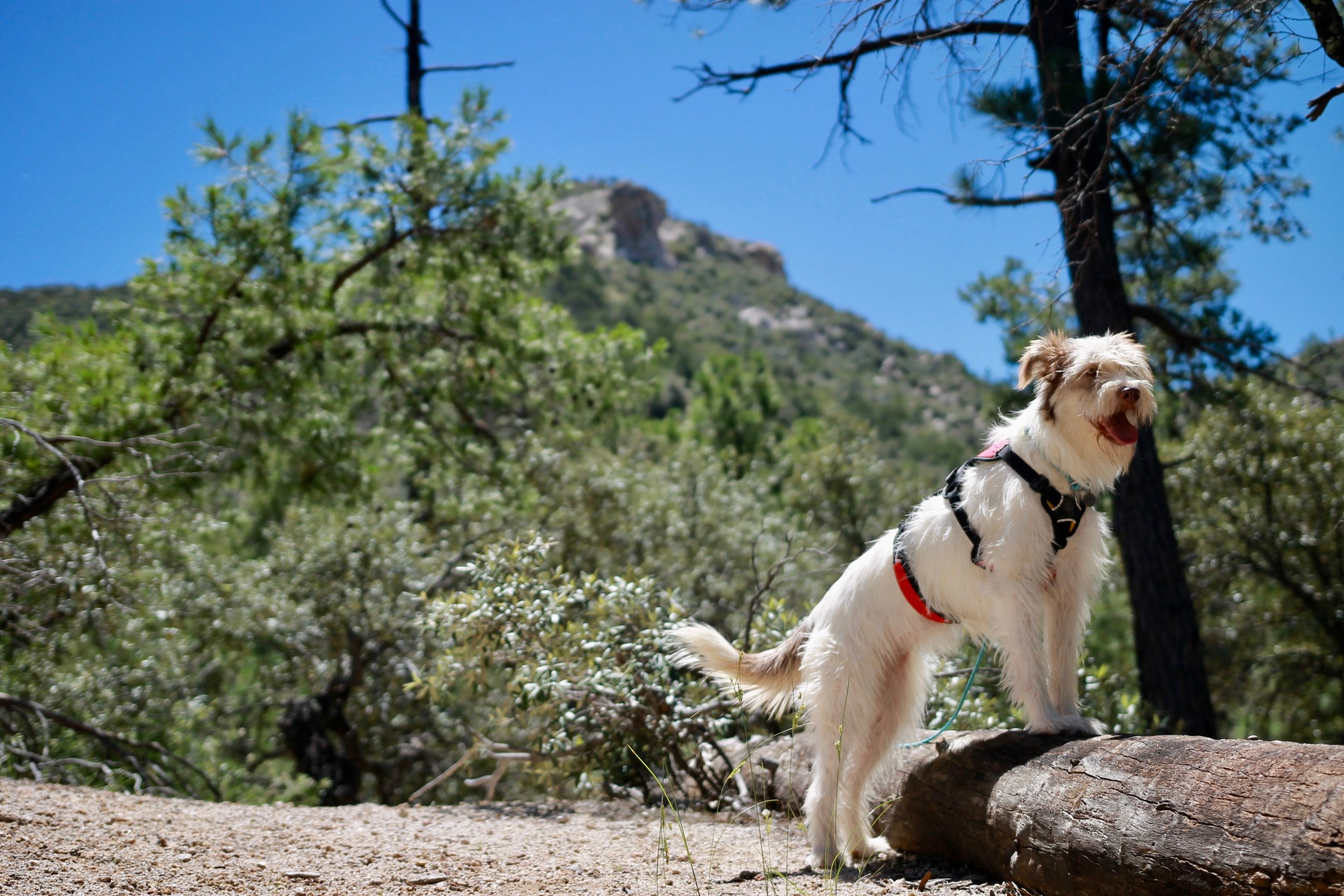 Hiking with Dogs Leave No Trace