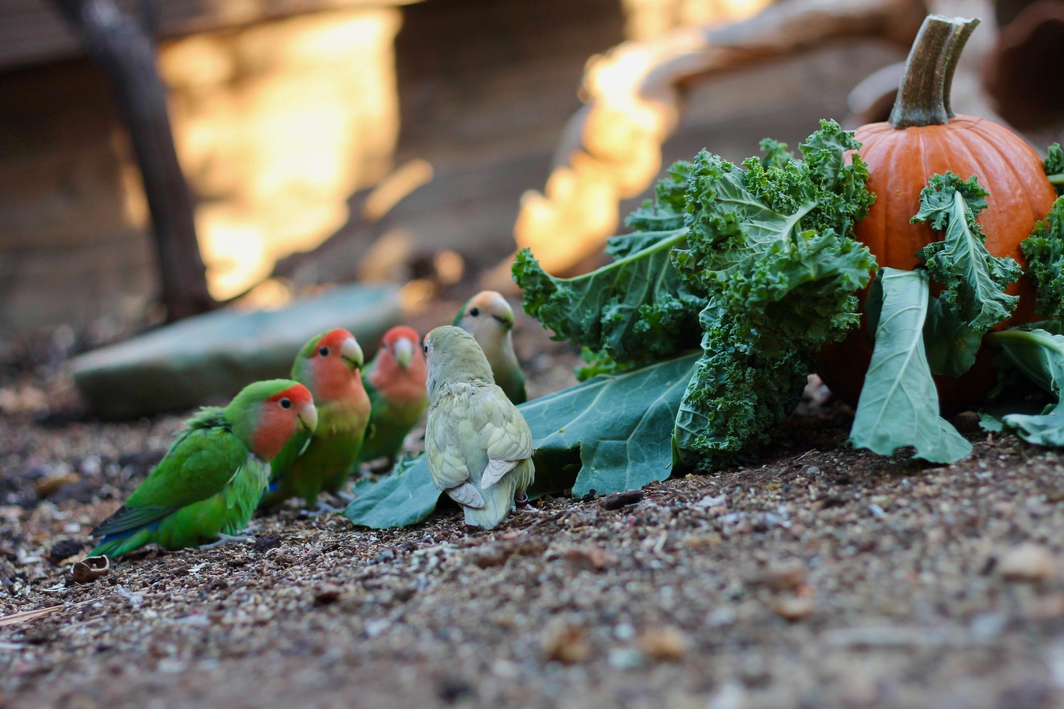 Parrot Foraging Parrot Enrichment