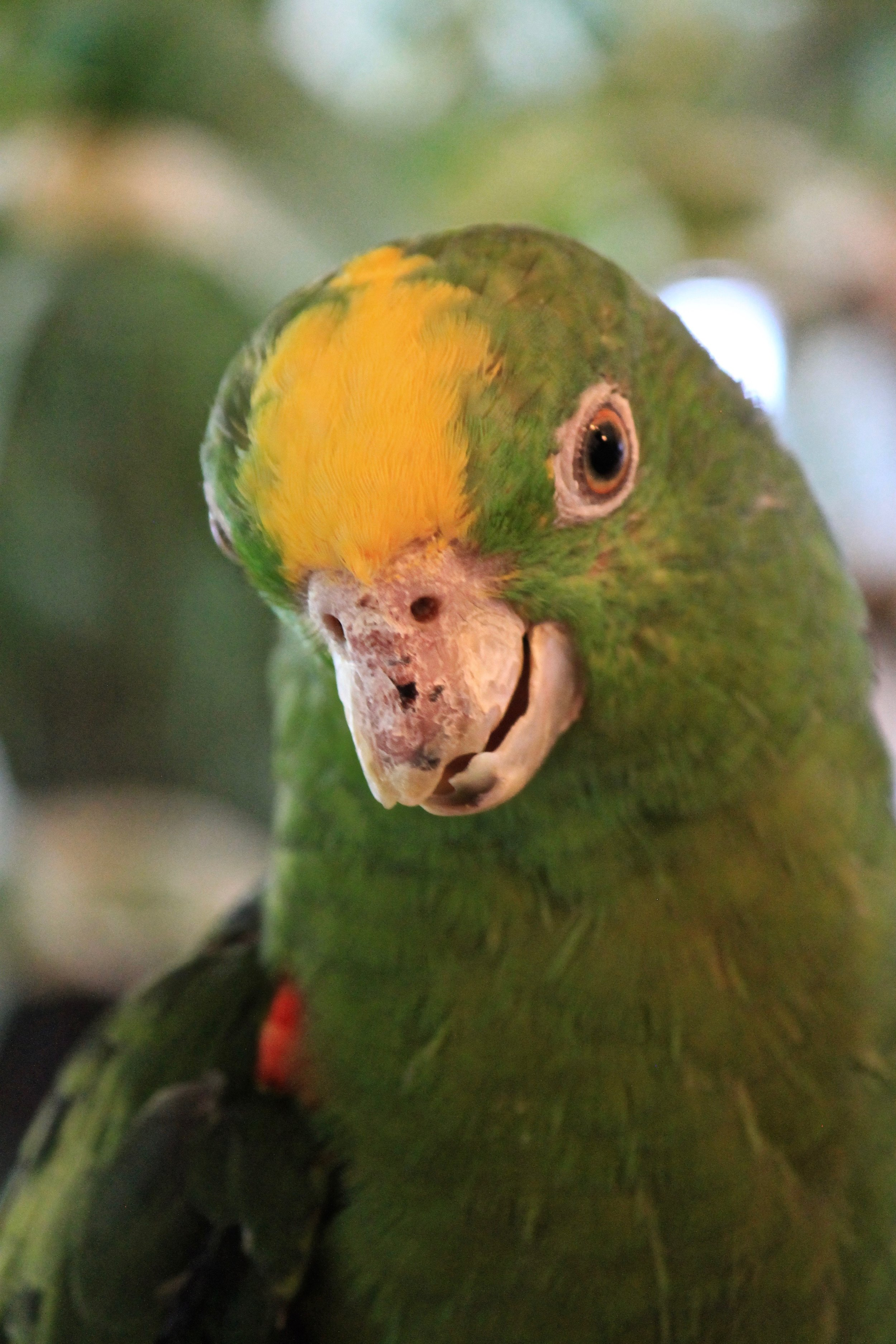 Special Needs Parrot