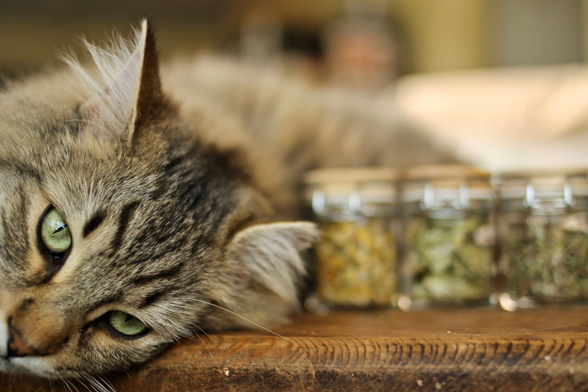 Cats can benefit from smelling different herbs