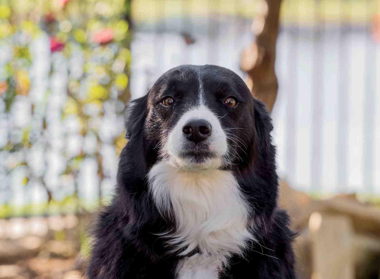 Dog Pet Photo Picture Wichita_0051.jpg