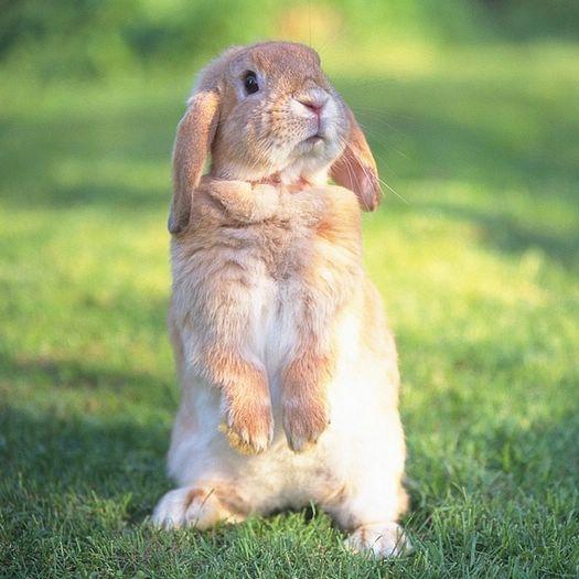 [wallcoo_com]_Lovely_rabbit_Picture_da033013s.jpg