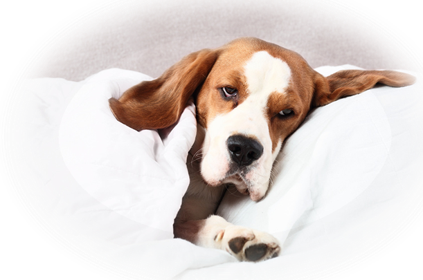 dog_sleeping_s.png