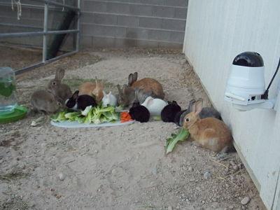Feeding-Time.jpg