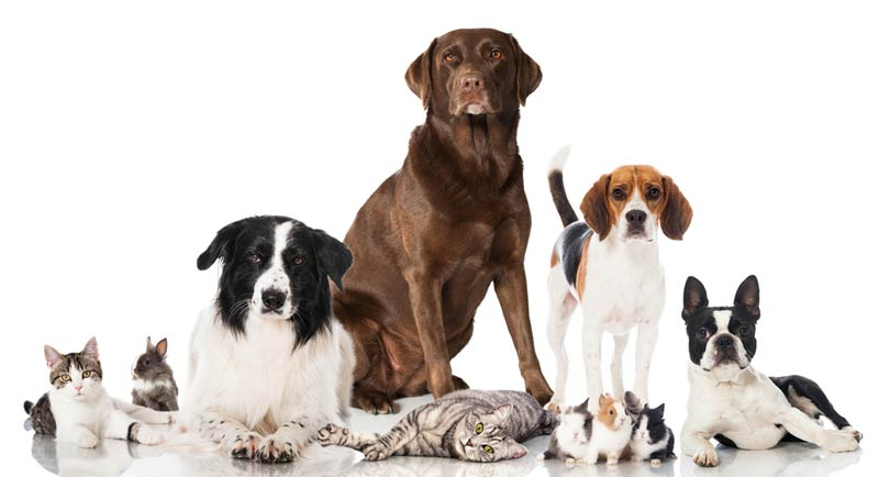 dogss.jpg
