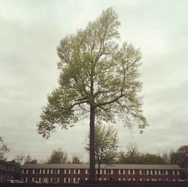 The Candor Arts logo is the large tree standing in front of Matt's grandma's apartment in Buffalo, NY. We think it acknowledges the root sources of our work—wood, paper, water, labor, growth, and family.
