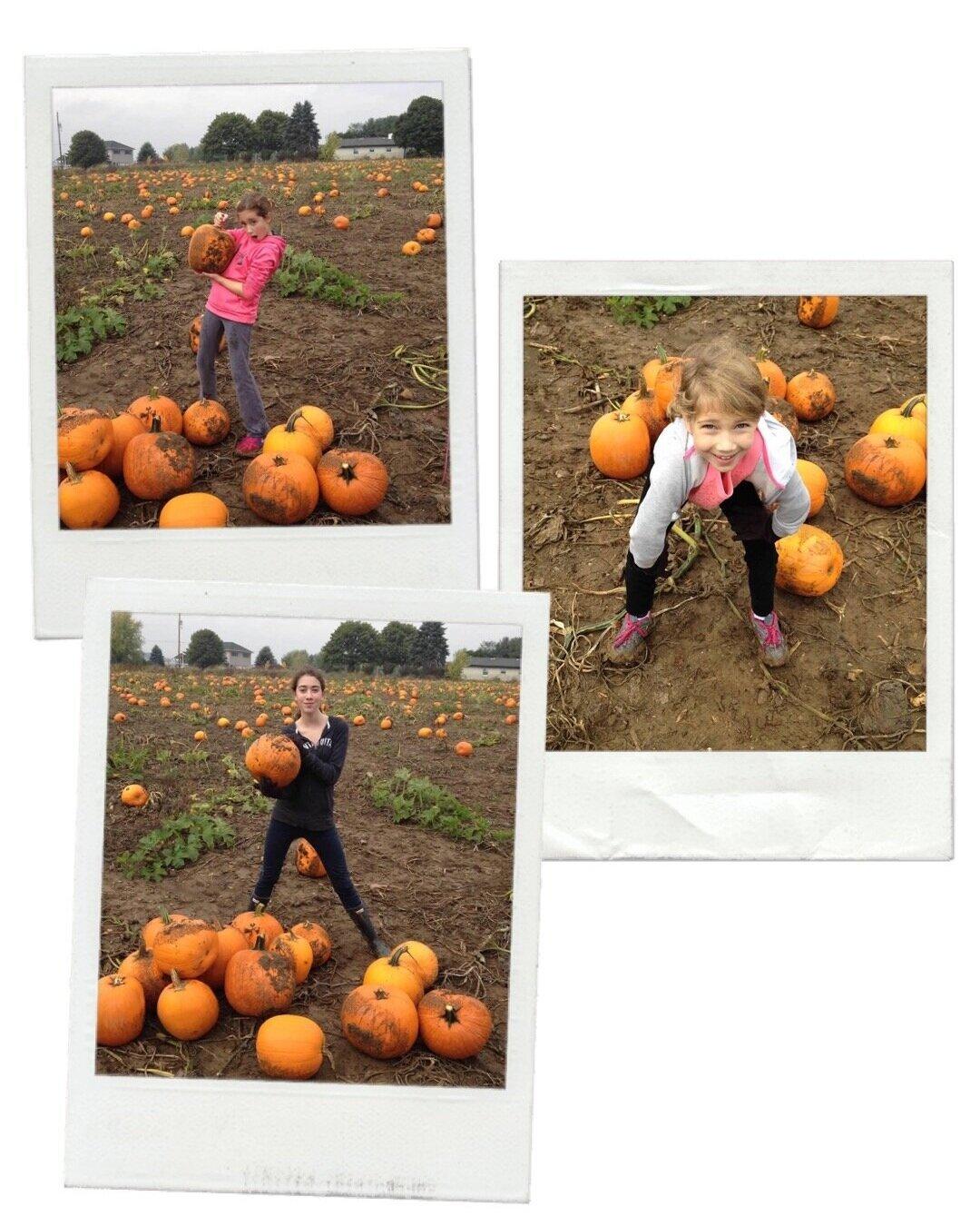 Pumpkins123.jpg