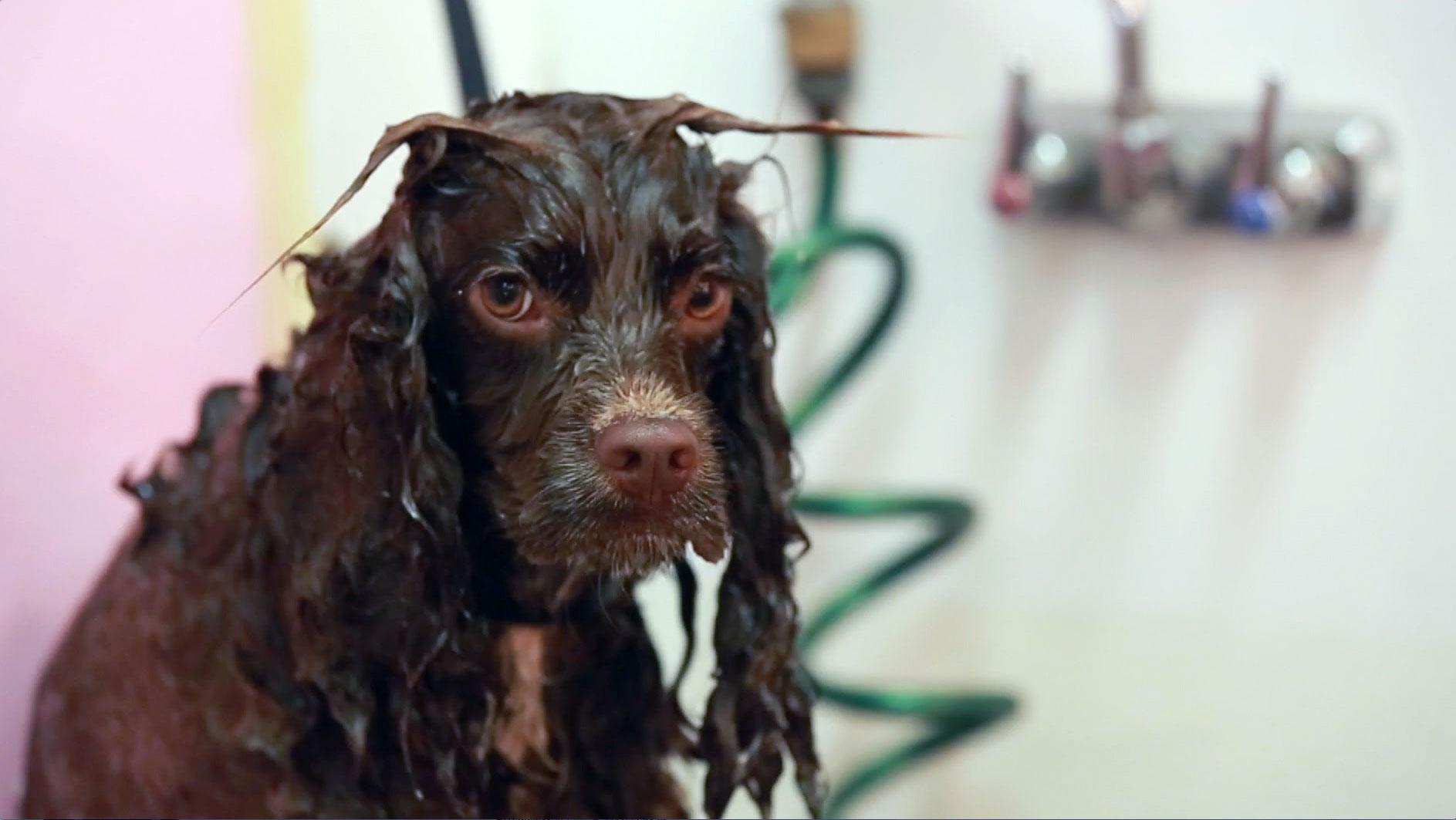wetdogface.jpg