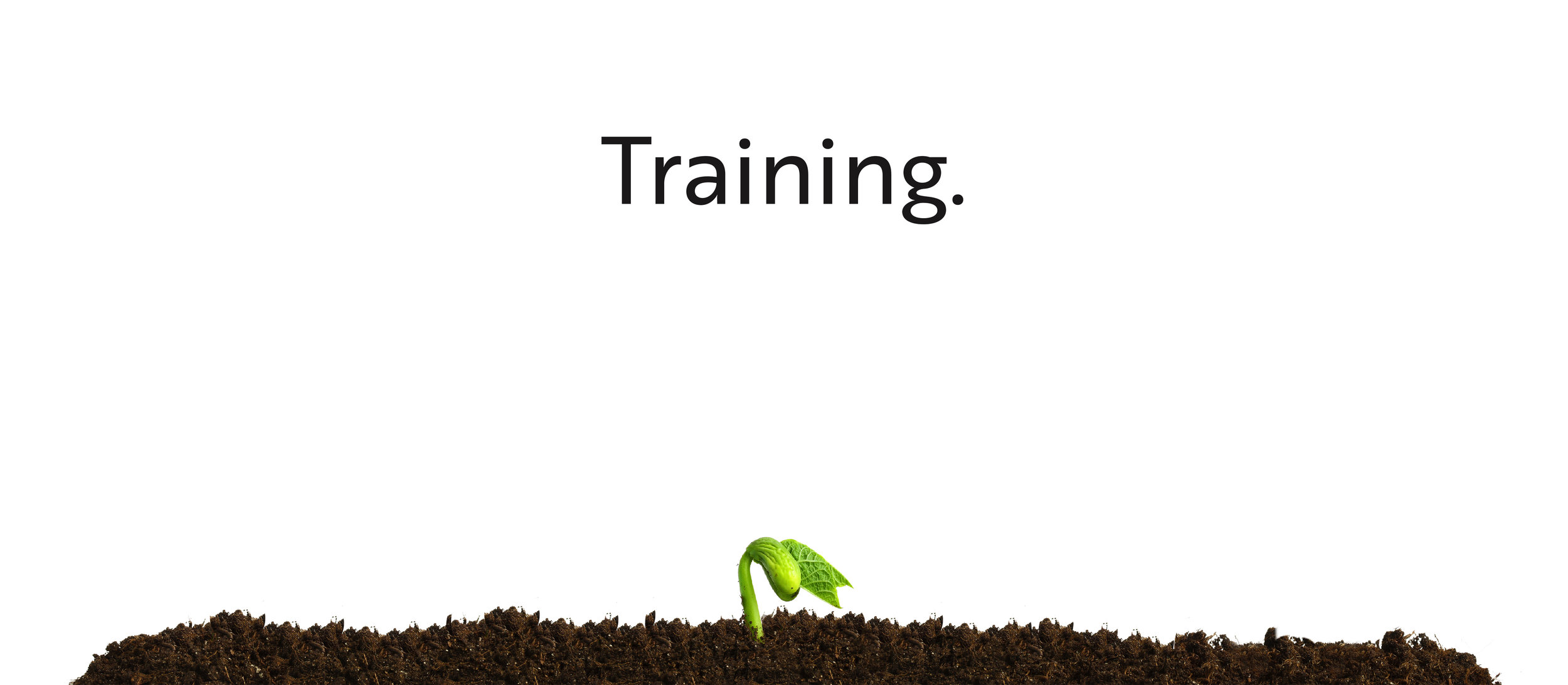 training4.jpg