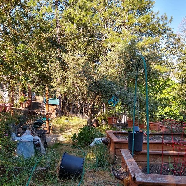 Hey, @dentistfarmer here's one of the three levels of terraces at our new place. Tons of work to do to get this back into shape this summer. In the meantime, we should have plenty of donut peaches, plums, apples, crabapples, and maybe even olives this year.