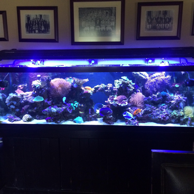 125g Saltwater Living Reef