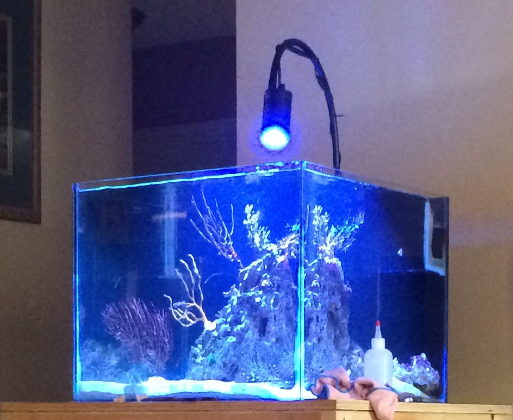 45g Saltwater Cube Living Reef