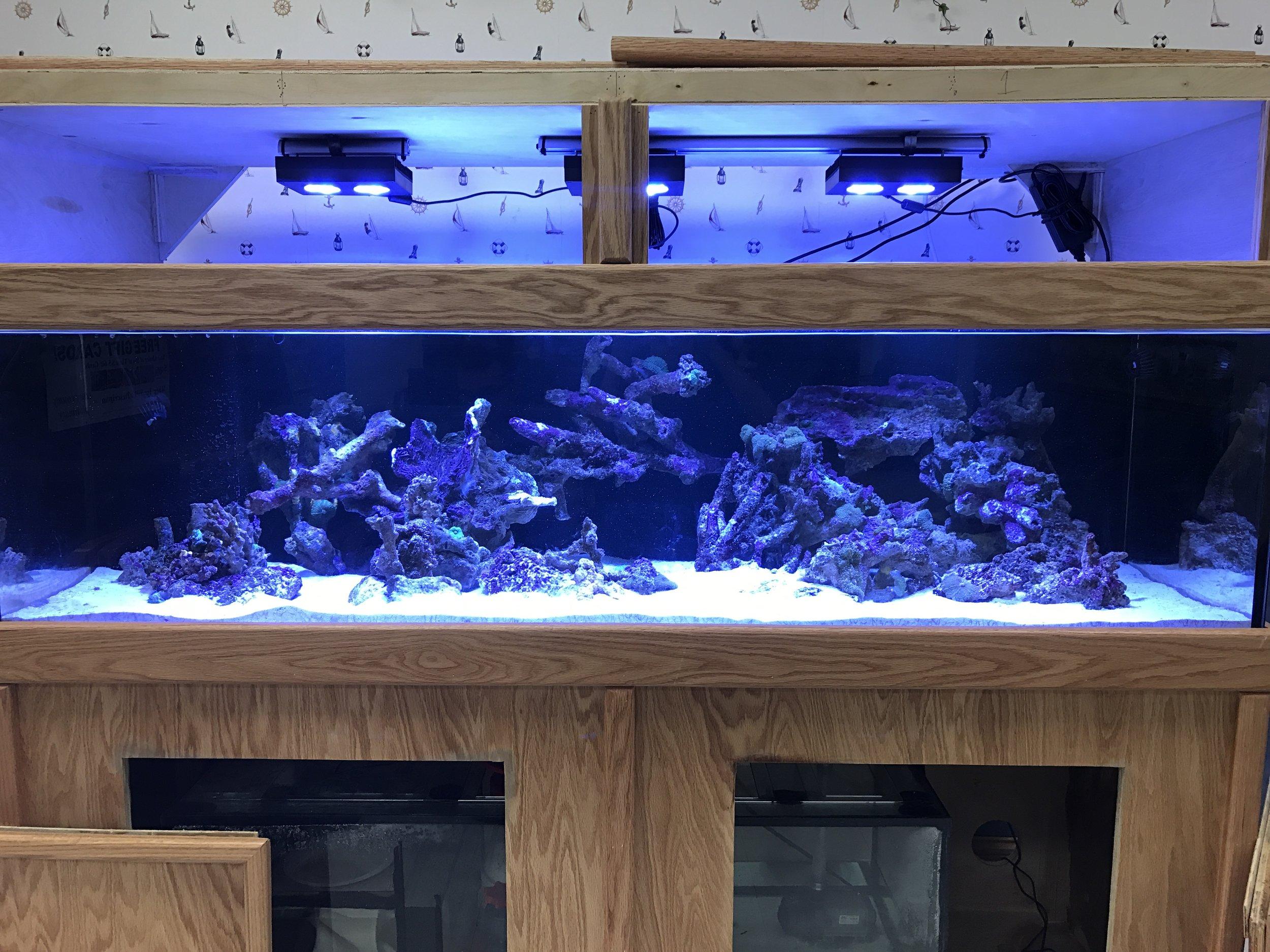 150g Saltwater Living Reef