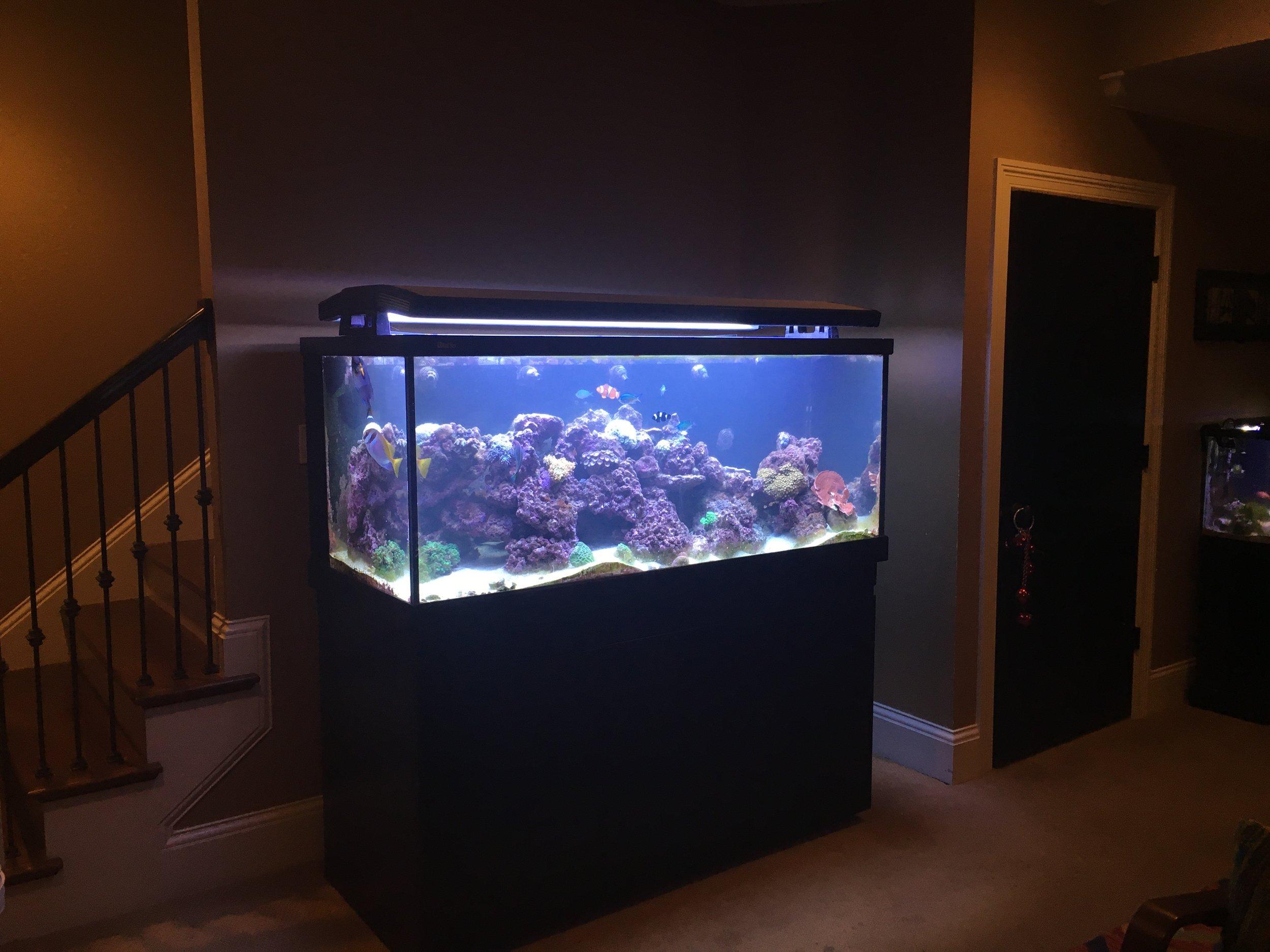 Saltwater Reef Aquarium in Customer's Home