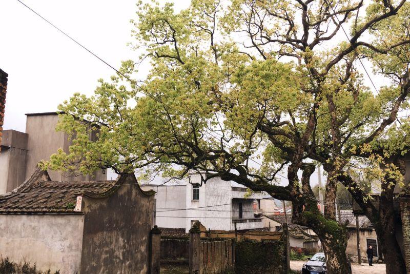 Liang Li's grandparents' home village in Fujian province. 梁莉的爷爷奶奶的老家在福建省。
