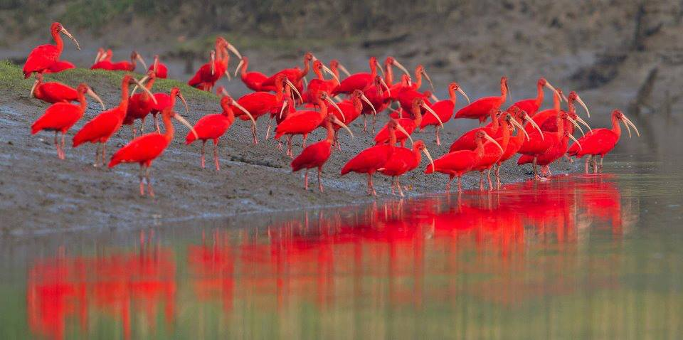 Caron Bird Sanctuary